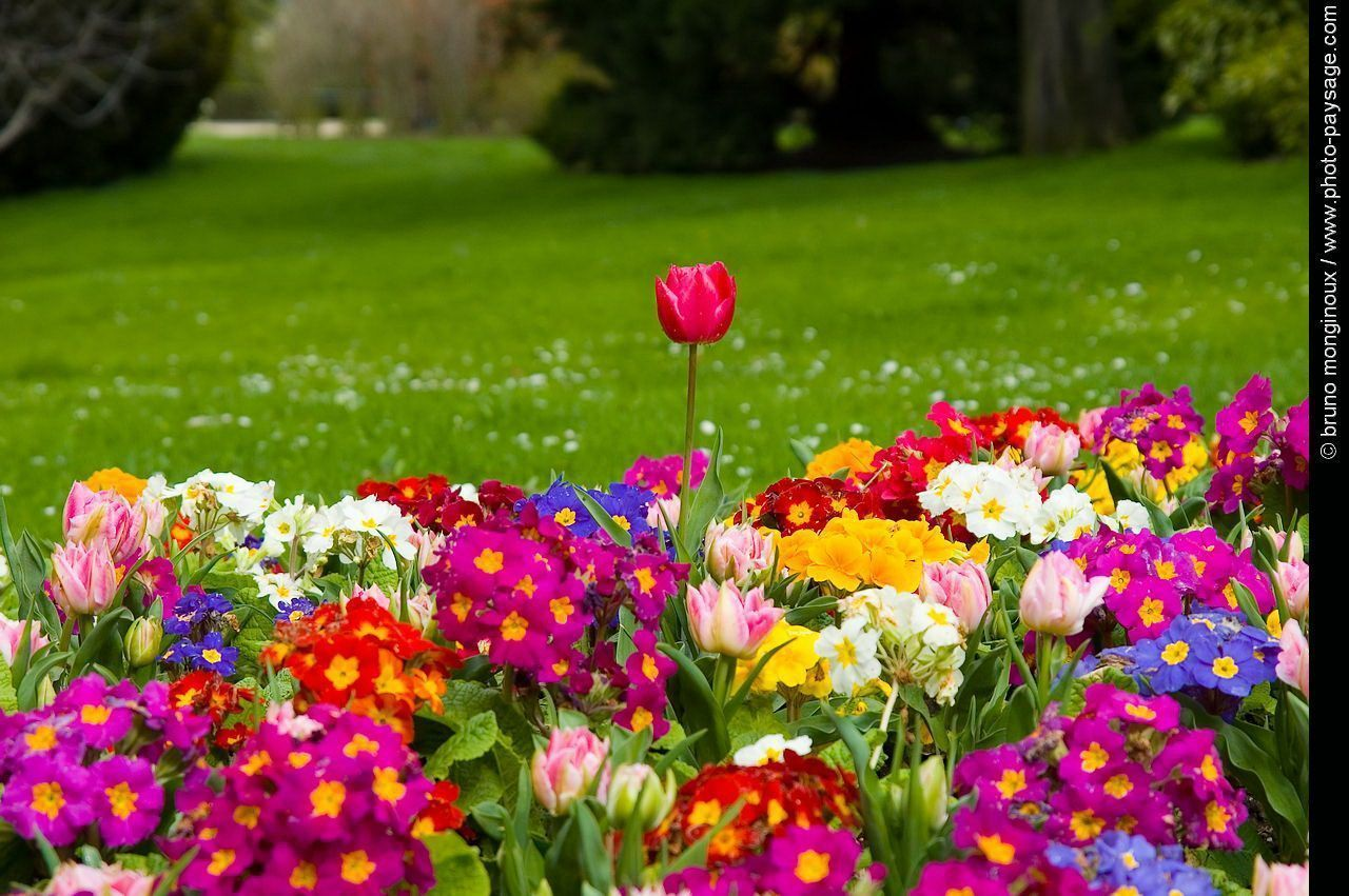 Fonds ecran printemps for Theme d ecran